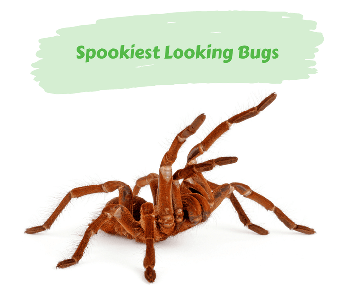 Spookiest Looking Bugs