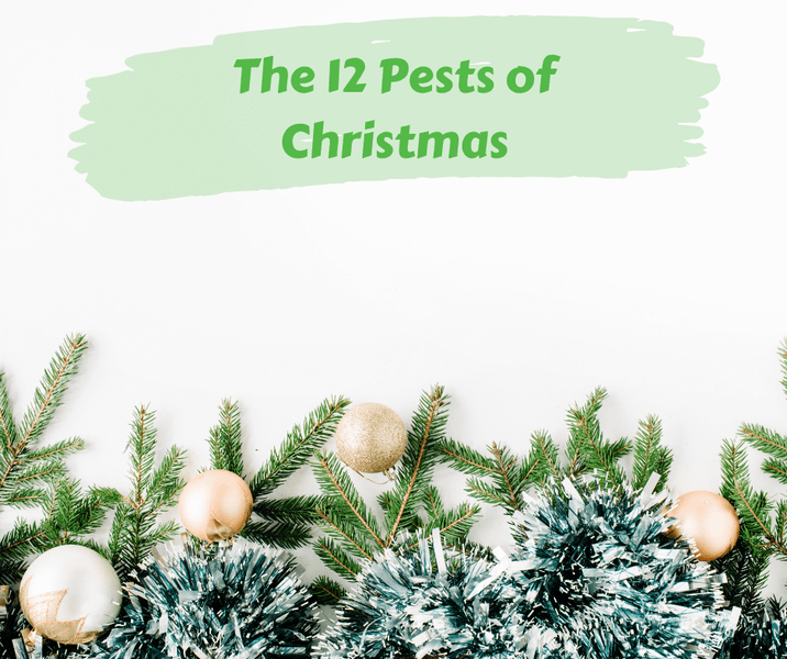 The 12 Pests of Christmas