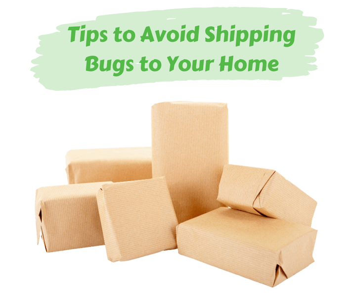 Tips to Avoid Shipping Bugs to Your Home