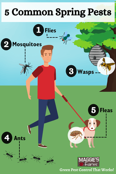 5 Common Spring Pests Infographic