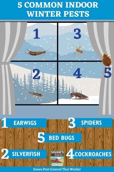 5 Common Winter Pests Infographic