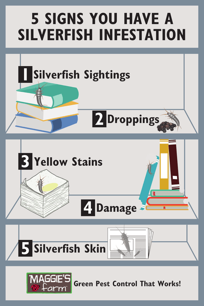 5 Signs You Have a Silverfish Infestation