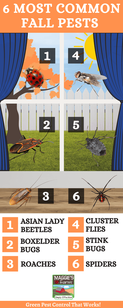 6 Most Common Fall Pests Infographic