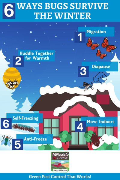 6 Ways Bugs Survive the Winter Infographic