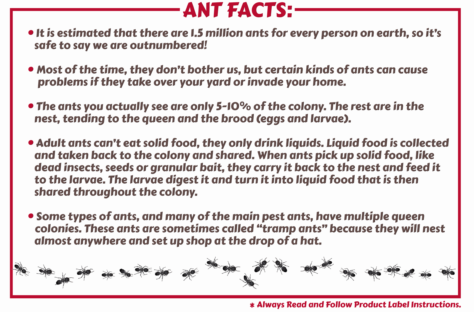 Maggie's Farm Ant Facts