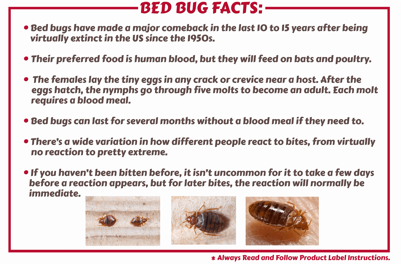 Bed Bug Facts & Products