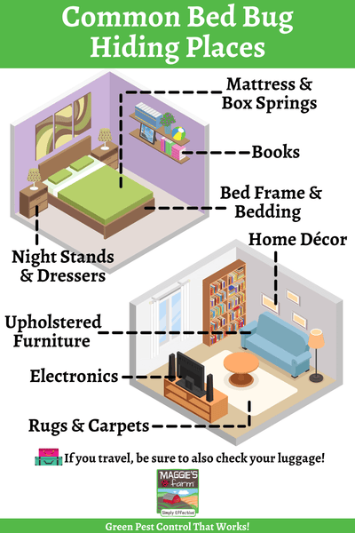 Common Bed Bug Hiding Places Infographic