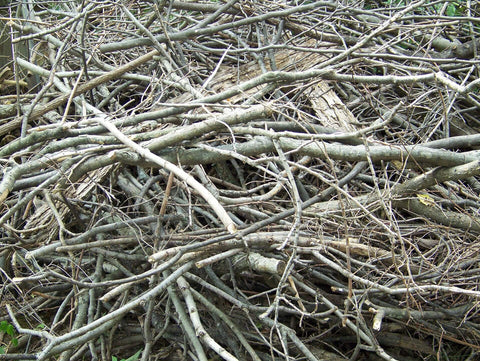 Pile of branches