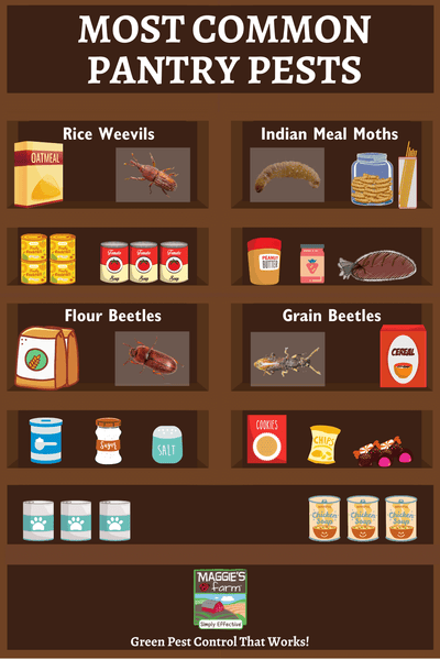Common Pantry Pests infographic