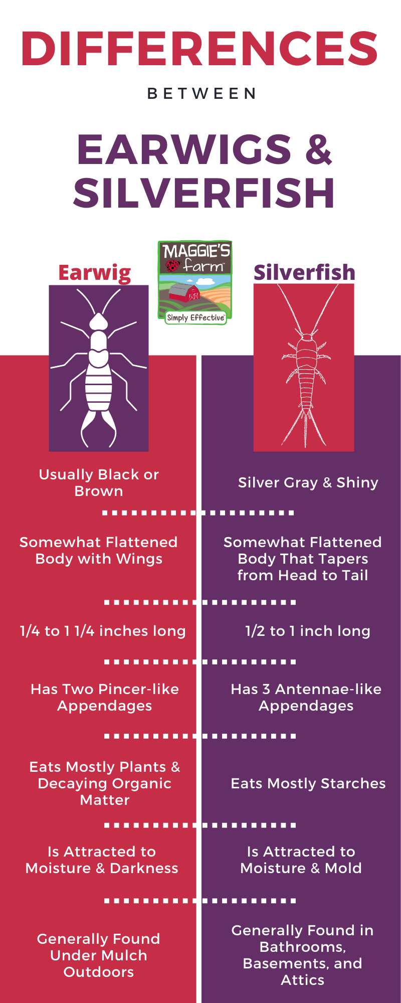 Difference Between Earwigs & Silverfish