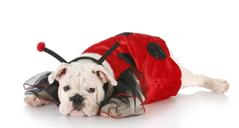 Dog in ladybug costume