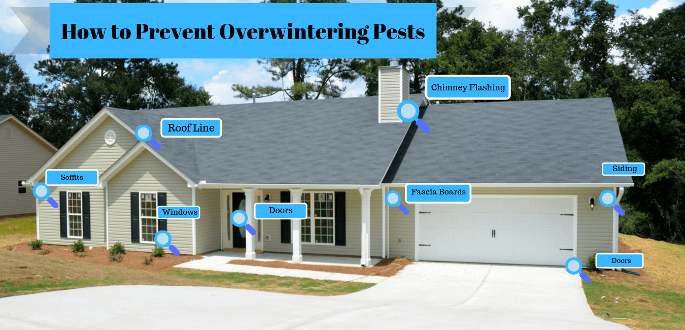 How to Prevent Overwintering Pests