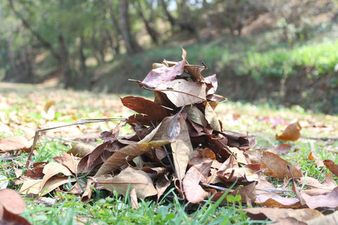 Pile of dried leaves