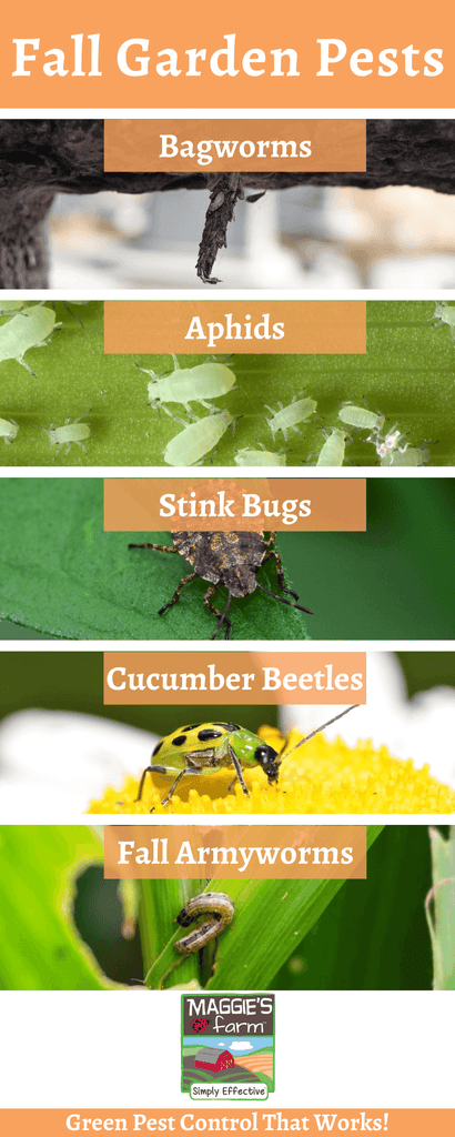 Fall Garden Pests Infographic