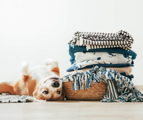 Dog near basket of blankets