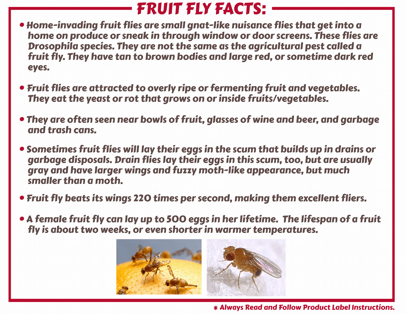 Fruit Fly Control & Products | Maggie's Farm – Maggie's Farm Ltd