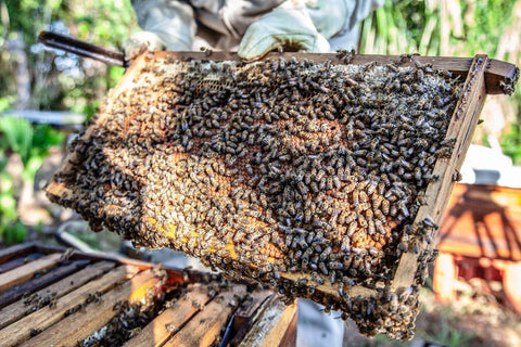 Group of bees