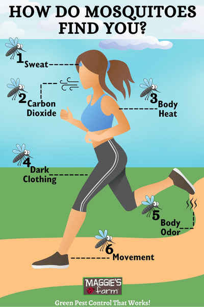 How Do Mosquitoes Find You Infographic