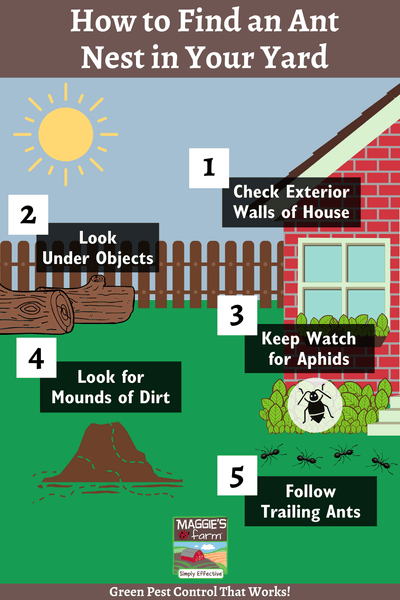 How to Find an Ant Nest in Your Yard infographic