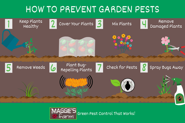 How to Prevent Garden Pests infographic