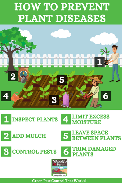How to Prevent Plant Diseases Infographic