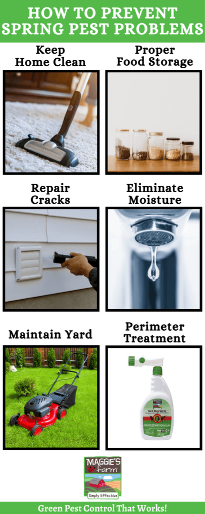 How to Prevent Spring Pest Problems infographic