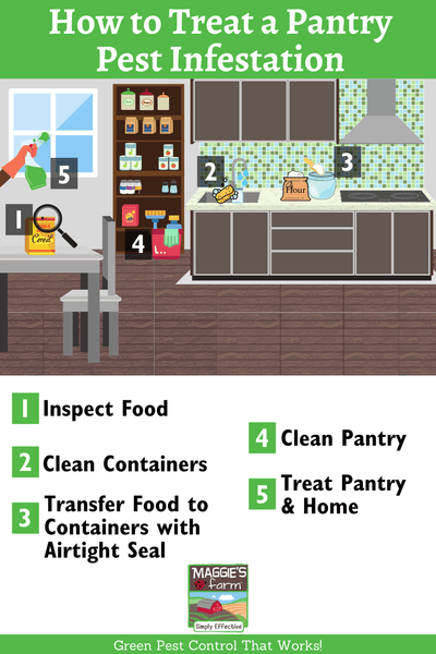 How to Treat a Pantry Pest Infestation infographic