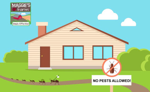 Keep Pest Out of Home