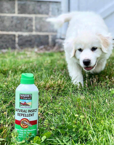 Puppy with Natural Insect Repellent