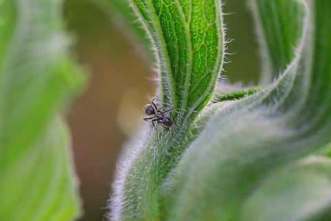 Ant on plant