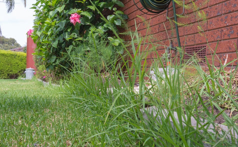 Weeds and overgrown grass