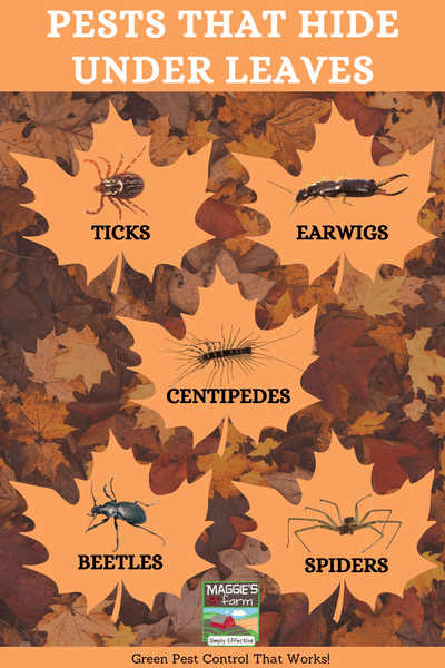 Pest That Hide Under Leaves Infographic