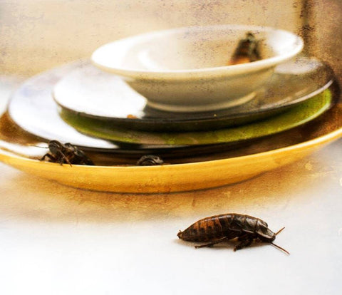 Cockroach on dishes
