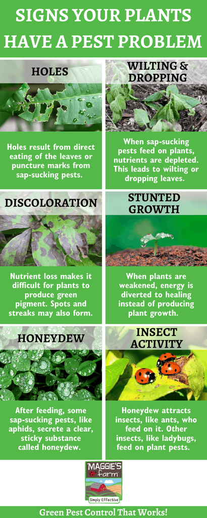 Signs Your Plants Have A Pest Problem Infographic