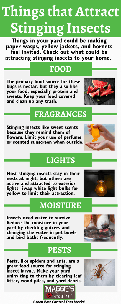 Things that Attract Stinging Insects Infographic
