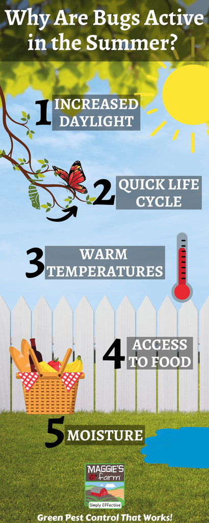 Why Are Bugs Active in the Summer Infographic