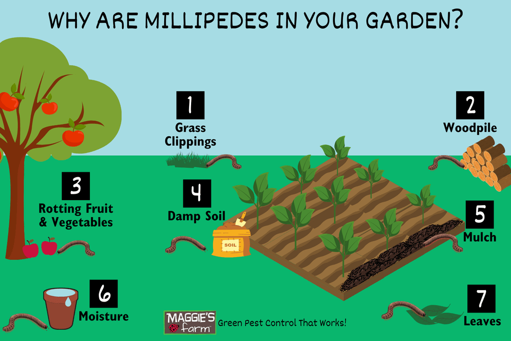 Why Are Millipedes in Your Garden Infographic