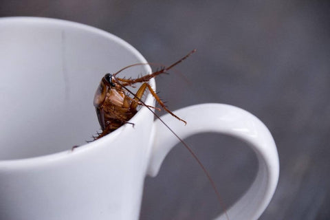 Cockroach in cup