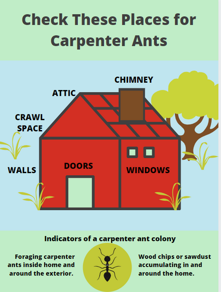 Where to Find Carpenter Ants