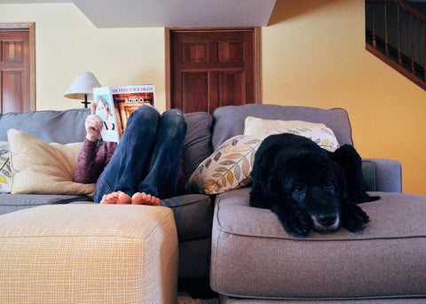 Dog and dog owner on couch