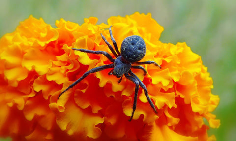 Spider on flower