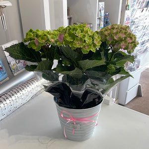 Hearts Card wooden