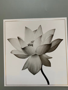 Flower black and white card