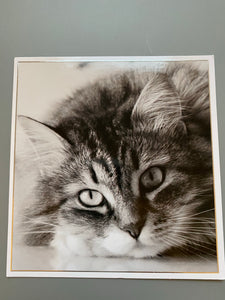 Cat black and white card