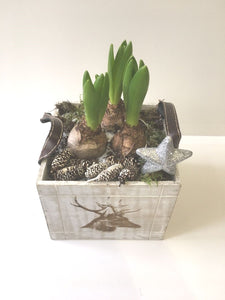 Christmas Hyacinth Planter