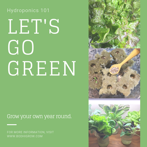 Home hydroponics how to
