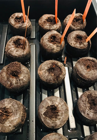 Expanded peat pellets for seed starting