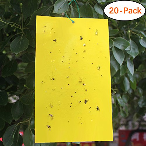 Sticky Traps for Flying Plant Insects Like Fungus Gnats, Aphids, Whiteflies, Leafminers - (6x8 Inches, Twist Ties Included)