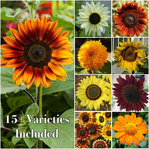 Sunflower Seed Mix - 15+ Varieties, Non-GMO (1,000+ seeds)