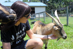 Animal Sanctuary Spotlight: Kindred Spirits Sanctuary!